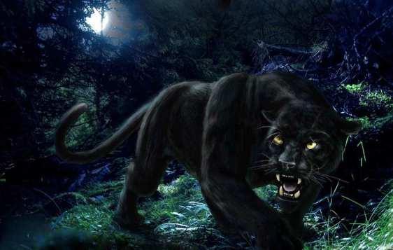 Black_Panther_90