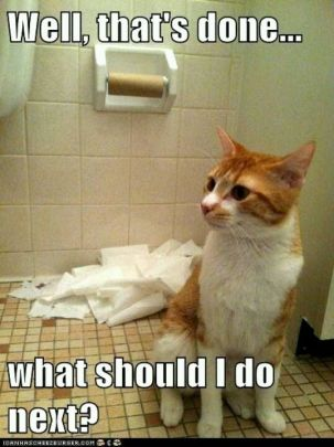 toilet roll cat - Copy