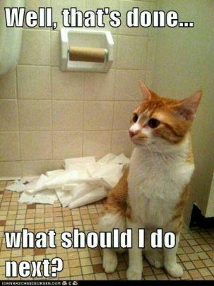 toilet roll cat - Copy